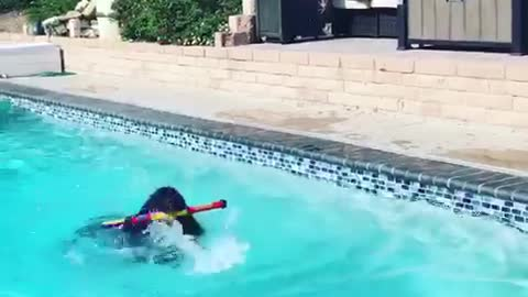 """Huge puppy """"makes waves"""" learning how to swim"""