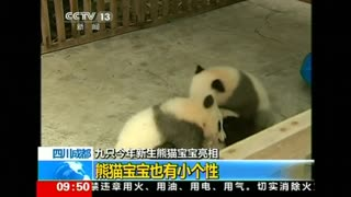 China shines a spotlight on panda cubs - Video