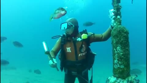 This friendly fish has visited a Japanese diver for 25 years