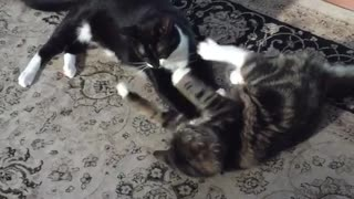 Two cats fighting one another