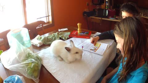 Helpful bunny assists girl with homework