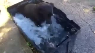 Video of dog's bath time goes viral