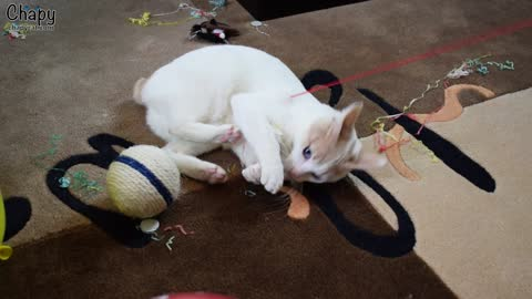 You Won't Believe How Excited This Kitten is at His First Birthday Party