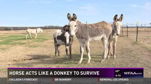 Bubbles the Horse Escaped Slaughter by Blending in with Donkeys and Boarded the 'Truck to Freedom'