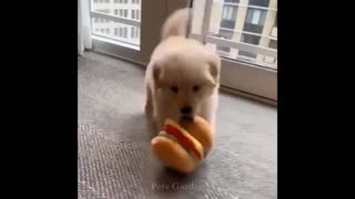 Funny animals and Cute Pets #1