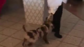 Puppy plays tug-of-war with little boy's diaper