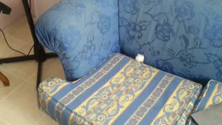 There's a cute fluffy surprise hiding in this sofa