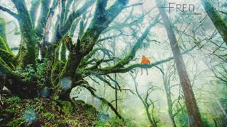 Relaxing Music for Stress Relief. Soothing Music Meditation Healing Therapy Yoga