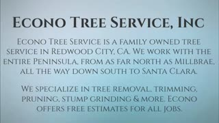 tree removal redwood city - Video