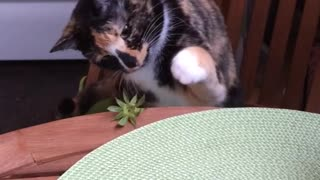 Cat plays with strawberry leaves