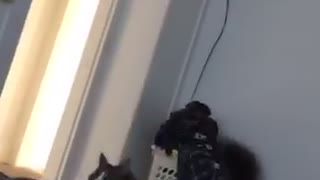 Cat jumps while trying to catch feather in bed - Video