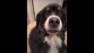 Funny dog video!!!