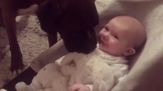 Sweet Big Dog Introduces Himself To Newborn Baby - Video