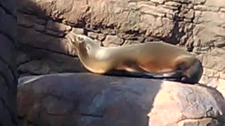 Sea lions at the Zoo in Indianapolis