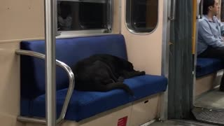 Black dog asleep on blue subway seat