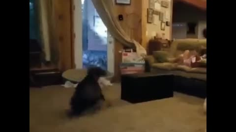 Dog freestyle dance