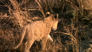 Number 1 Compilation Of Wild Live Animals Video