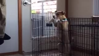 White puppy climbs out black cage - Video