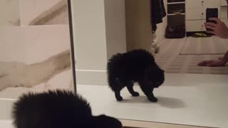 Black cat afraid of itself in the mirro - Video