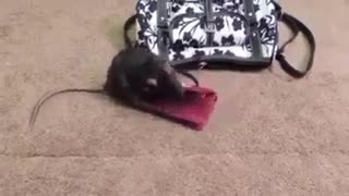 mouse lover of money - Video