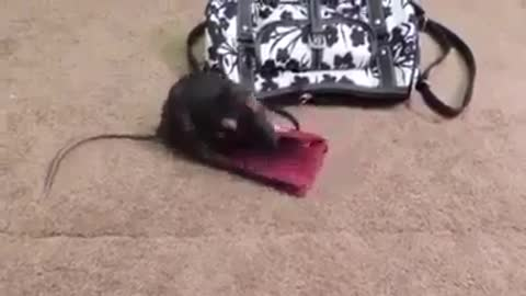 mouse lover of money