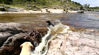 Brave Pup Saves His Buddy From Drowning In Waterfall - Video