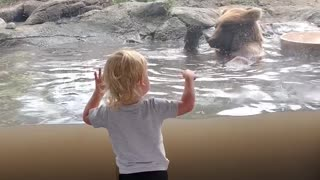 Little Boy Impressed with Bears