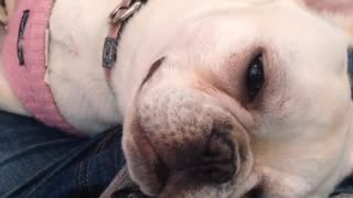 Dog asleep with eyes open - Video