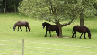 Clever horse uses tree to scratch back - Video