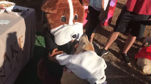 Friendly Pooch Enjoys Relaxing Massage From A Dog Mascot