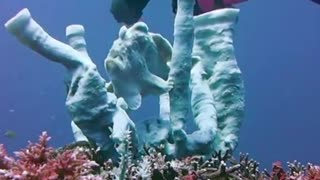 Frogfish Performs Underwater Show