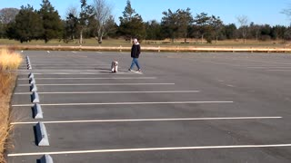 A Boarding Bulldog - Video