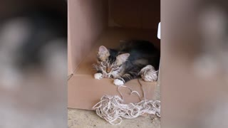 Kitten goes wild inside a box - Video
