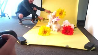 Dog Modeling is Hard Work - Video