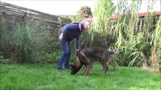 Amazing dog tricks with 2 dogs - Video