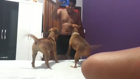 How to Multiply a Dog