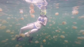 Snorkeler bravely swims with thousands of jellyfish - Video