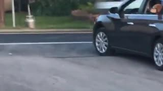 Brown dog sticking head out window wearing glasses  - Video