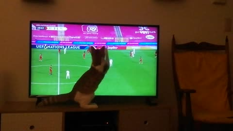 Sports-loving kitten gets really into the soccer game on TV