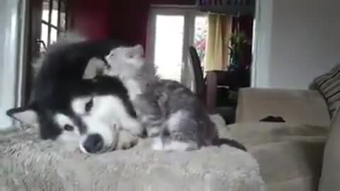 Amazing dog playing with a cat strange friendship