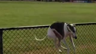 Funniest Animals Doing Things - Best Cats And Dogs Reactions