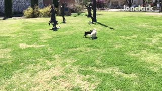 White dog trips in slomo and black dog jumps over it