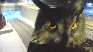 Owl photobombs highway traffic camera in Finland - Video