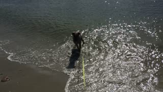 Puppy's First Time Playing in the Ocean