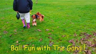 """ Doggy Ball Fun ! "" : With the Gang :-)"