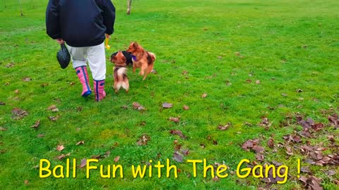 """"""" Doggy Ball Fun ! """" : With the Gang :-)"""