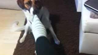 Dog Trick Socks - Video