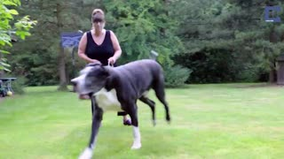The Puppy She Brought Home Grew Into A 200 Pound Dog - Video