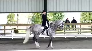 Dressage rider moves with horse so beautifully, it feels like dancing - Video