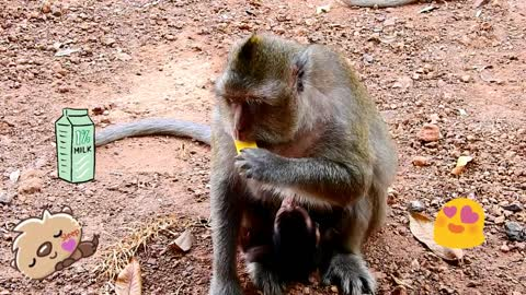 Adorable baby monkey Just born